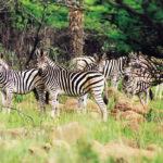 Fugitives Drift Game Reserve